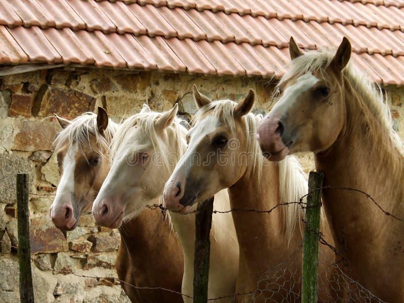 cztery konie fotografia stock