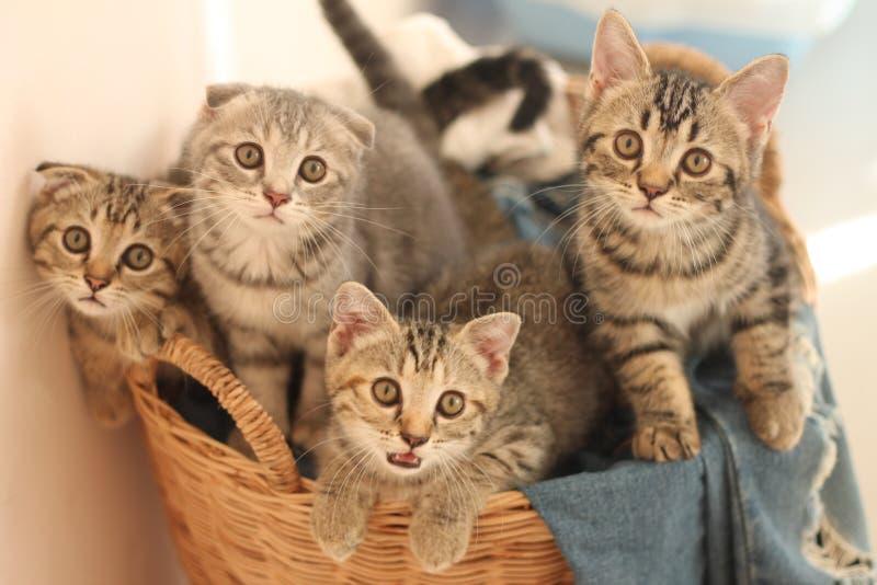 Cztery małego kota zdjęcia stock