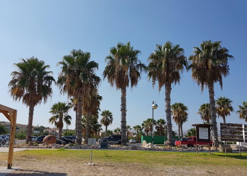 Cztery palm stojak na przyroscie z rzędu Słońce błyszczy, w obraz royalty free