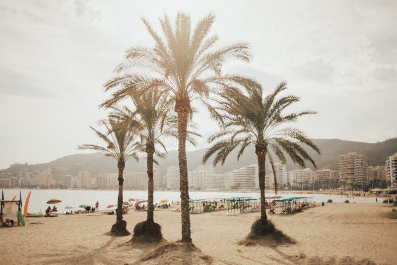 Cztery palmy na plaży w Cullera z górami na tle spain Valencia zdjęcia royalty free
