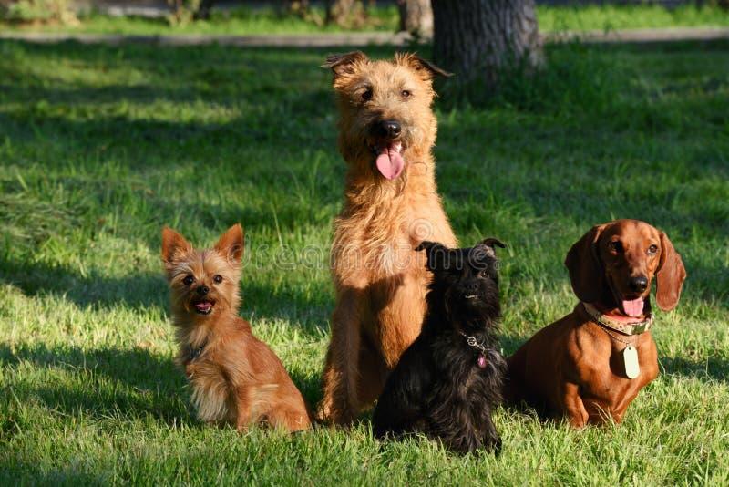 Cztery psa na trawie obraz stock