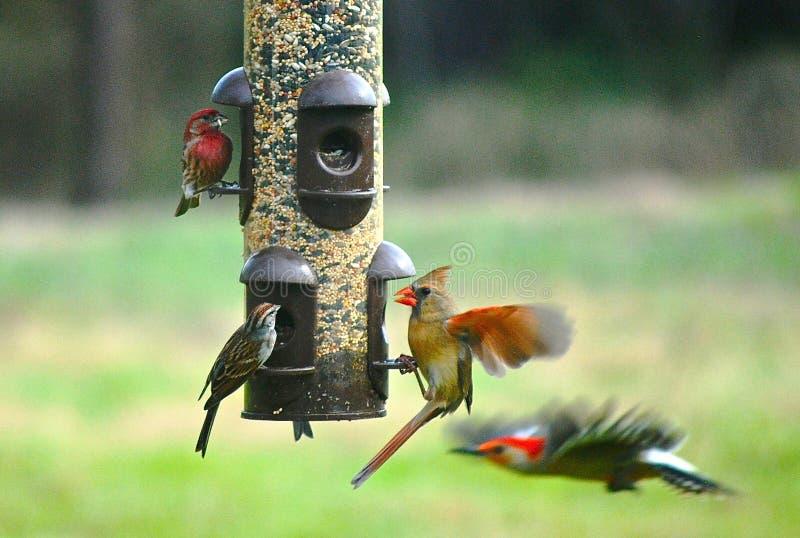 Cztery różnego gatunku ptaki przy dozownikiem zdjęcia stock