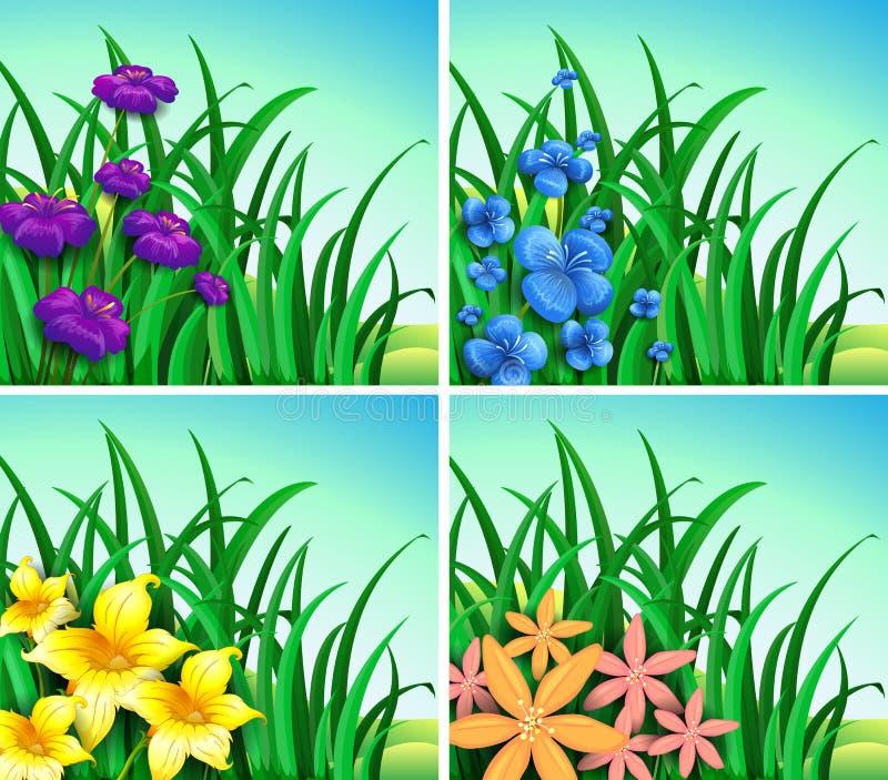 Cztery sceny kwiaty i trawa ilustracja wektor