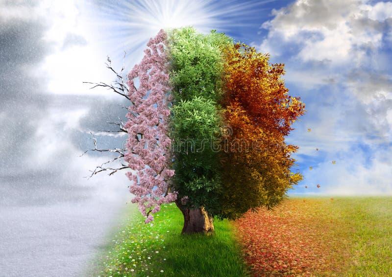 Cztery sezonów drzewo, fotografii manipulacja obrazy royalty free