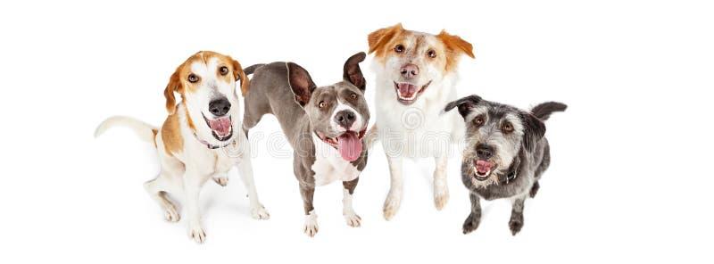 Cztery Szczęśliwych psów Przyglądający Up Horyzontalny sztandar zdjęcia stock