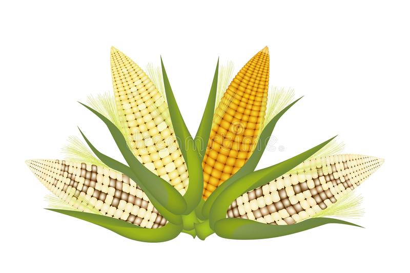 Cztery ucho kukurudza z plewą i jedwabiem royalty ilustracja