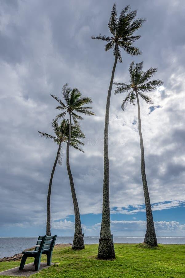 Cztery wysokiego drzewka palmowego w Kawaikui plaży parku na Oahu, Hawaje zdjęcie royalty free