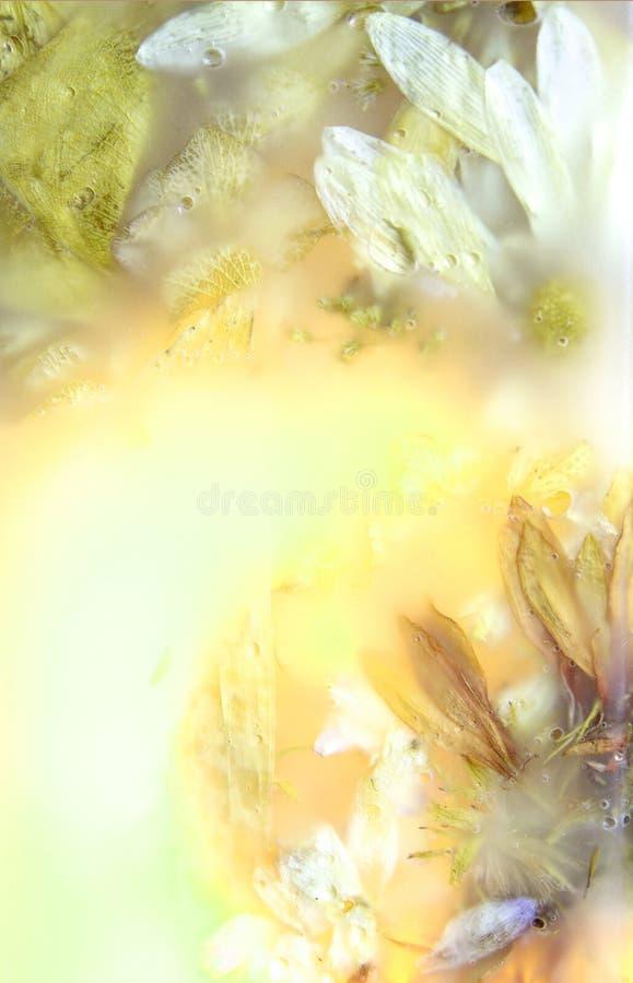 cztery zachowany kwiaty fotografia stock
