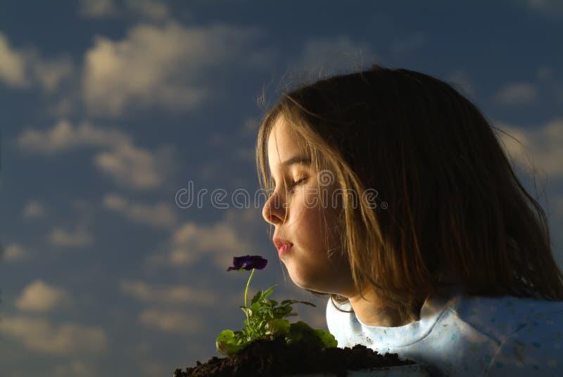 czuć dziewczyny kwiat fotografia royalty free