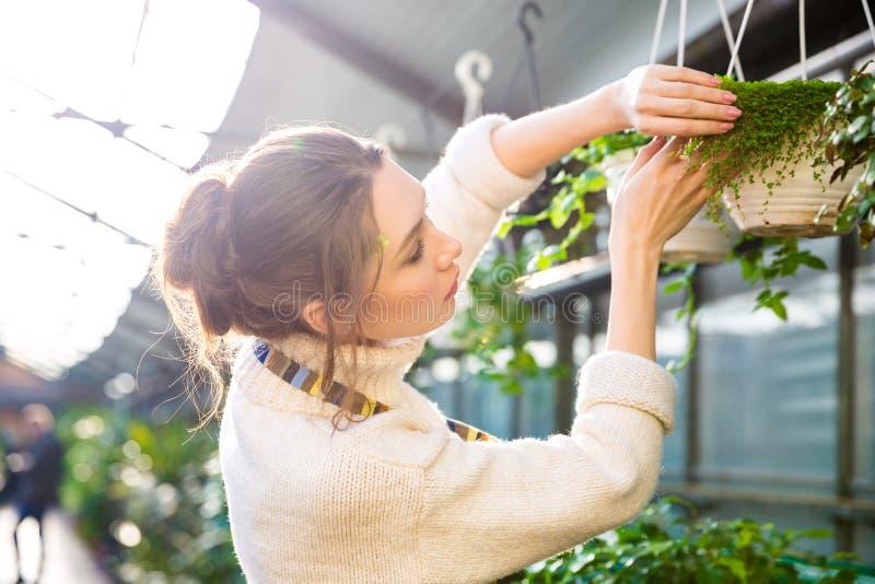 Czuła żeńska ogrodniczka pracuje z roślinami i kwiatami obrazy stock