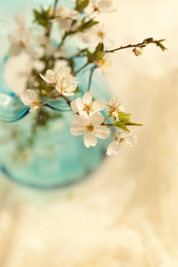 Czuła kwiatonośnej wiśni gałąź zdjęcia royalty free