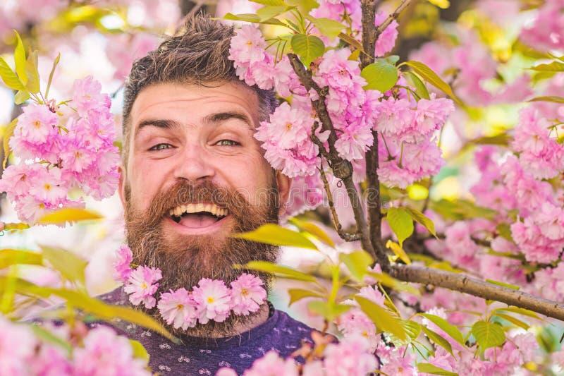 Czułości pojęcie Brodaty mężczyzna z świeżym ostrzyżeniem z kwiatem Sakura na tle Modniś z Sakura okwitnięciem wewnątrz zdjęcie royalty free