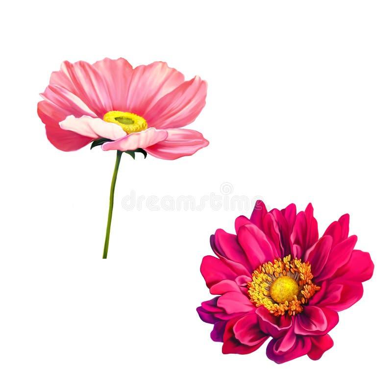 Czuły różowy maczek i Mona Lisa kwiat royalty ilustracja