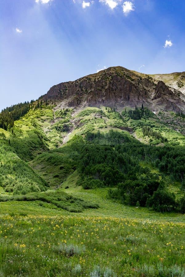 Czubaty butte Colorado góry krajobraz i wildflowers obraz royalty free