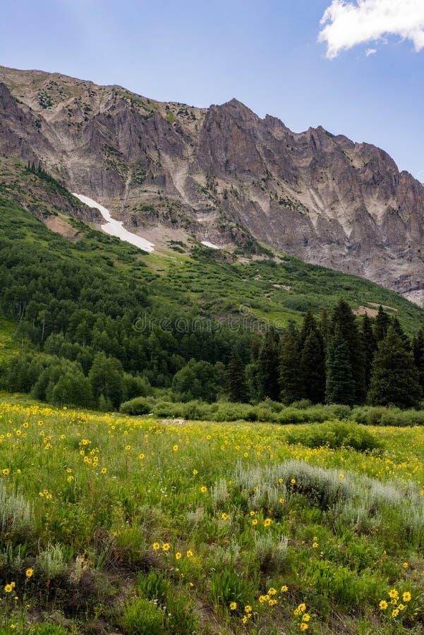 Czubaty butte Colorado góry krajobraz i wildflowers fotografia royalty free