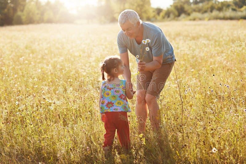 Czule dziad wydaje czas wolnego z jego małą wnuczką, przespacerowanie na zieleni polu wpólnie, podnosi up rumianki, iść zdjęcie stock