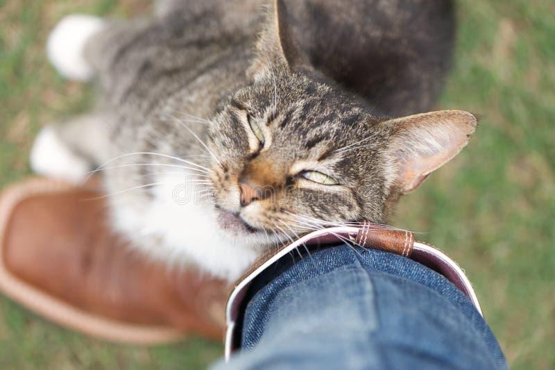czule przeciw kota nogi nacieraniu zdjęcie royalty free