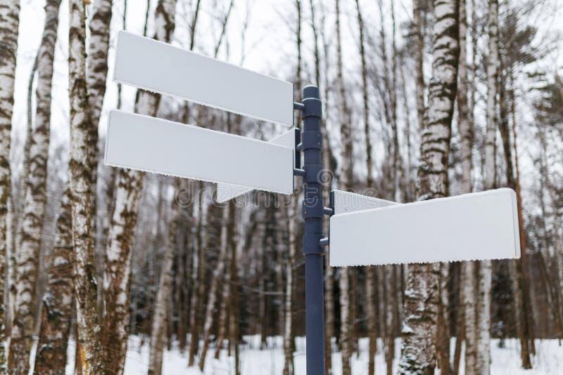 Czyści pointeru na lasowym sposobie obrazy stock