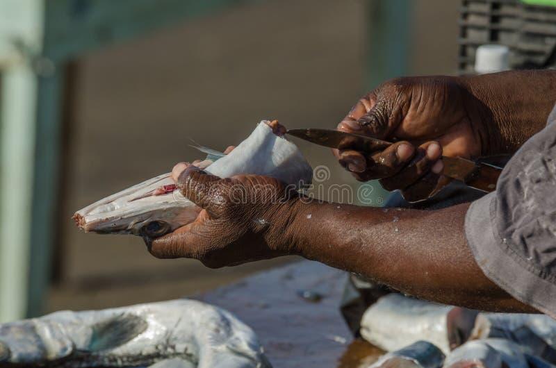 Czyści ryba obrazy royalty free