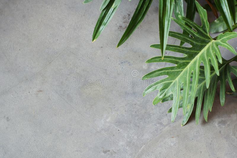 Czysta szarość betonu cementu bryły ściany podłoga z częścią roślina liść dla tło z kopii przestrzenią fotografia stock