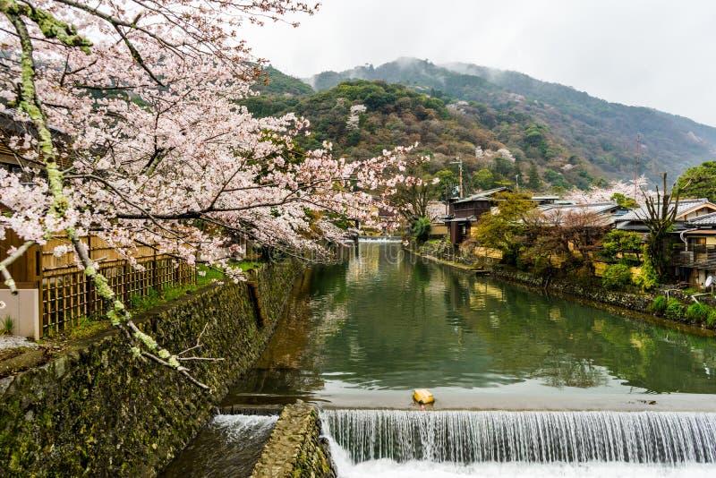 Czysta woda i Sakura kwiat obrazy stock