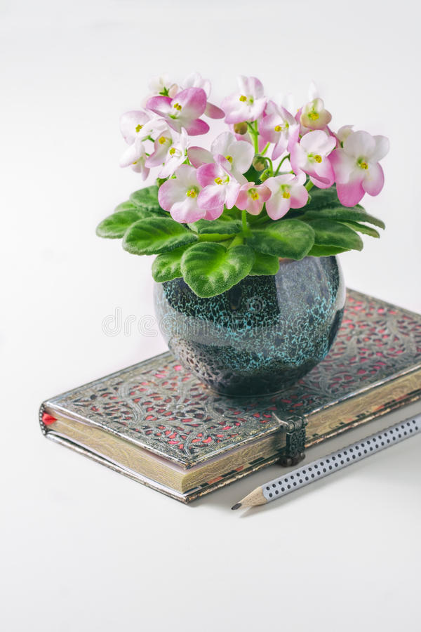 Czysty notatnika, menchii i Białego Afrykański fiołek na bielu stole od above, obrazy stock