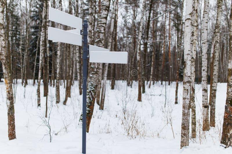 Czysty pointer na lasowej drodze zdjęcia royalty free