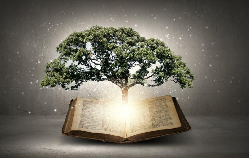 Czytać rozwija wyobraźnię zdjęcie royalty free