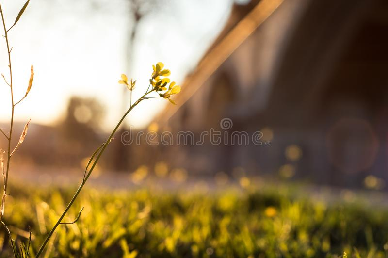 Warm flower royalty free stock images