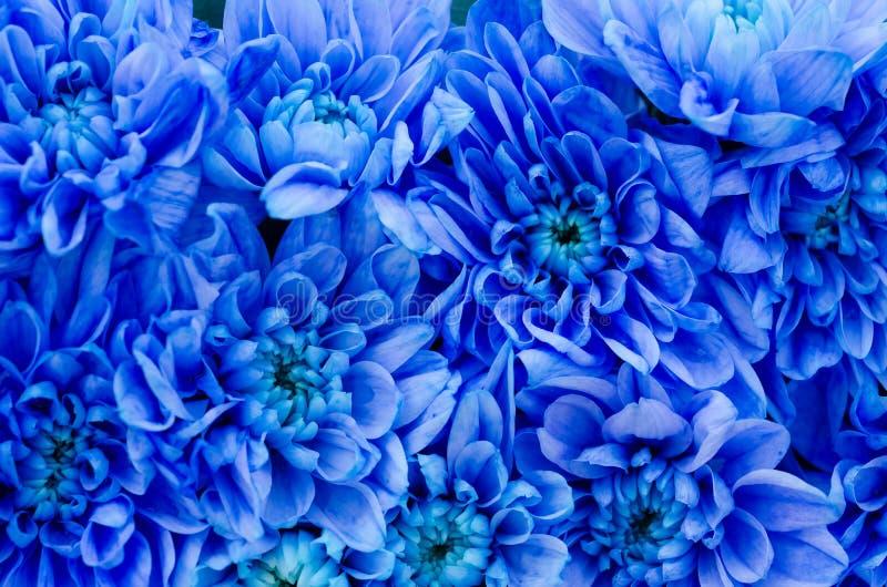 Dália azul foto de stock royalty free