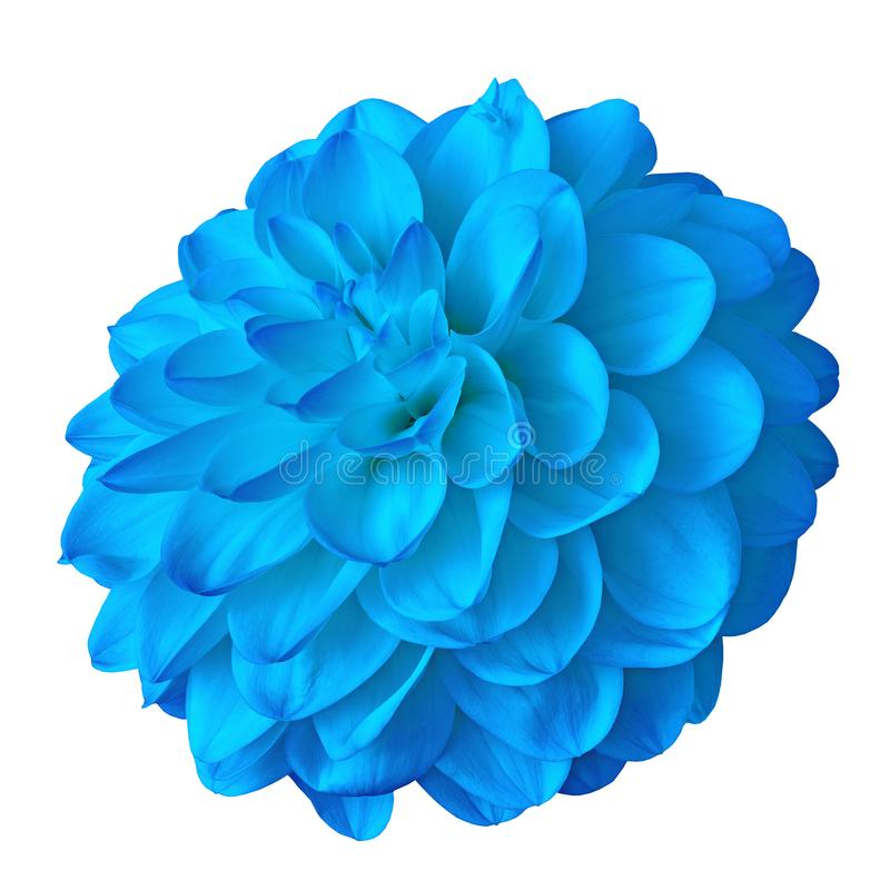 Dália azul dos azuis celestes da flor isolada no fundo branco com trajeto de grampeamento Close-up imagens de stock