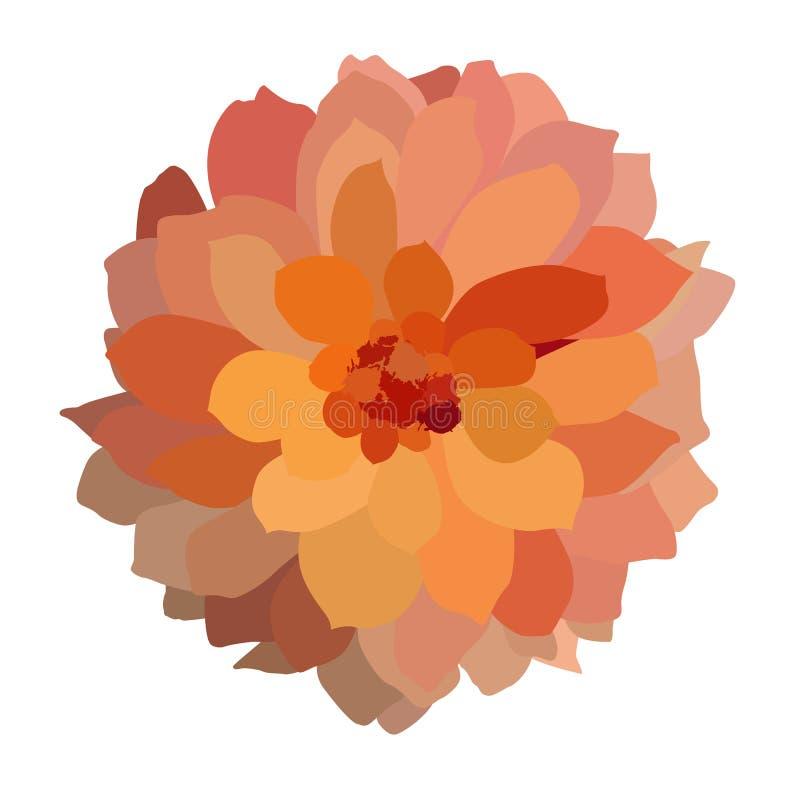 Dália colorida colorido isolada no fundo branco Ilustração do vetor ilustração stock