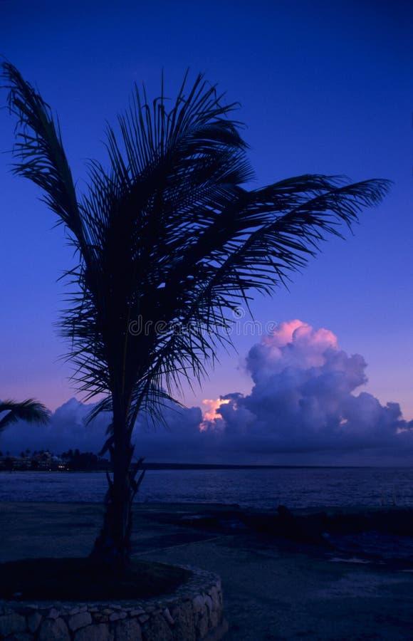 Dämmerung des Sonnenuntergangs auf Palme am Bayahibe Strand stockfoto