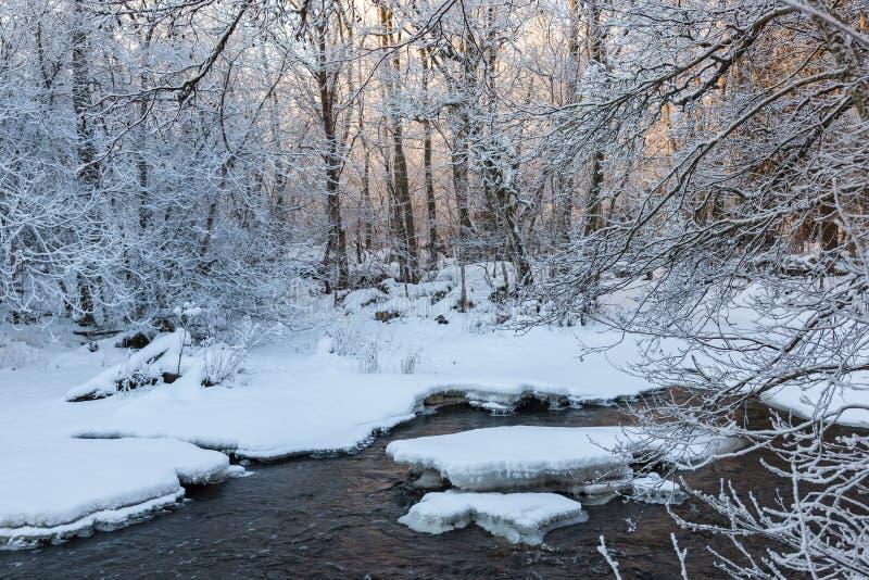Dämmerung am Fluss im Wald im Winter stockbild