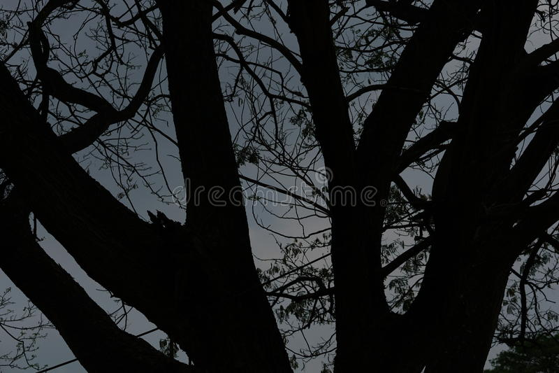 dämmerung Sonnenuntergang bis den Himmel ist mit dem Schatten des Baums dunkel lizenzfreie stockbilder