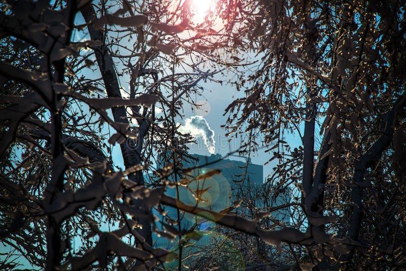 Dämpfen Sie auf Gebäude bei der niedrigen Temperatur durch die Bäume, die mit Schnee bedeckt werden stockbild