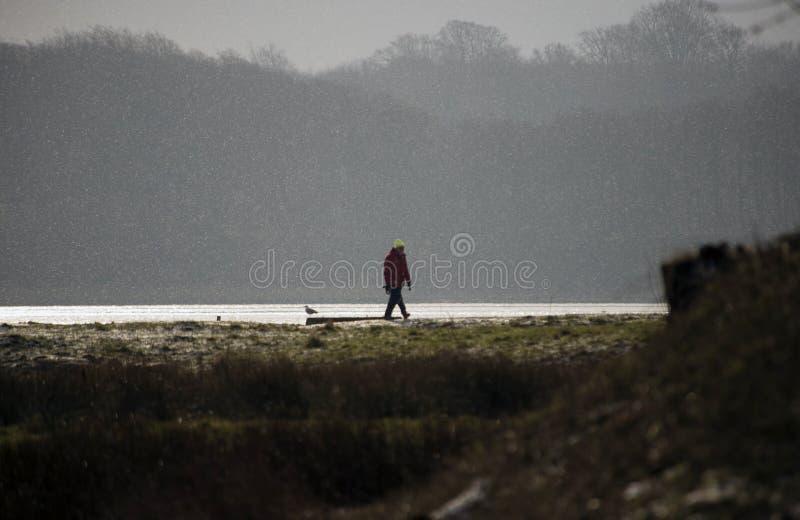 Dänische Küstenlinienwinterlandschaft und -schneeflocken stockfotos