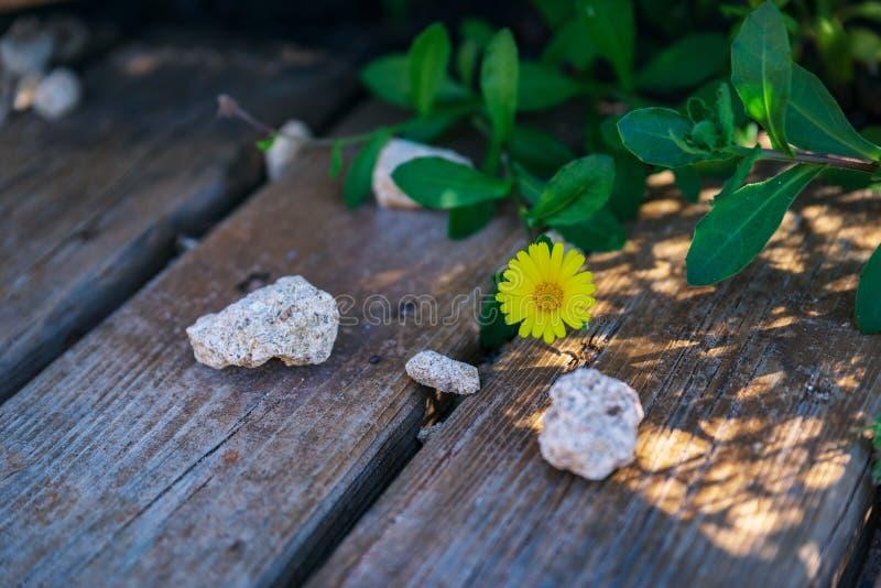 Därför att en blomma kan spira i det mest oväntade stället royaltyfri foto