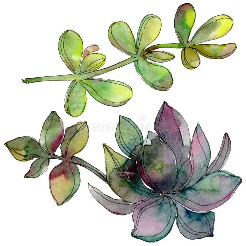 Dżungla botaniczny tłustoszowaty kwiat Akwareli tła ilustracji set Odosobniony tłustoszowaty ilustracyjny element ilustracja wektor