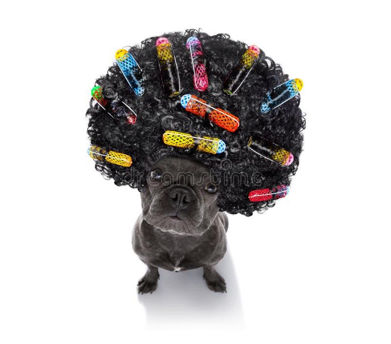 Dålig frisyr på hundkapplöpning royaltyfria bilder