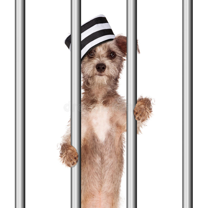 Dålig hundfånge i arrest royaltyfri bild