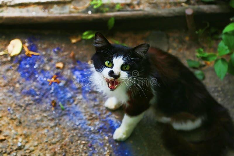 dålig katt arkivfoto