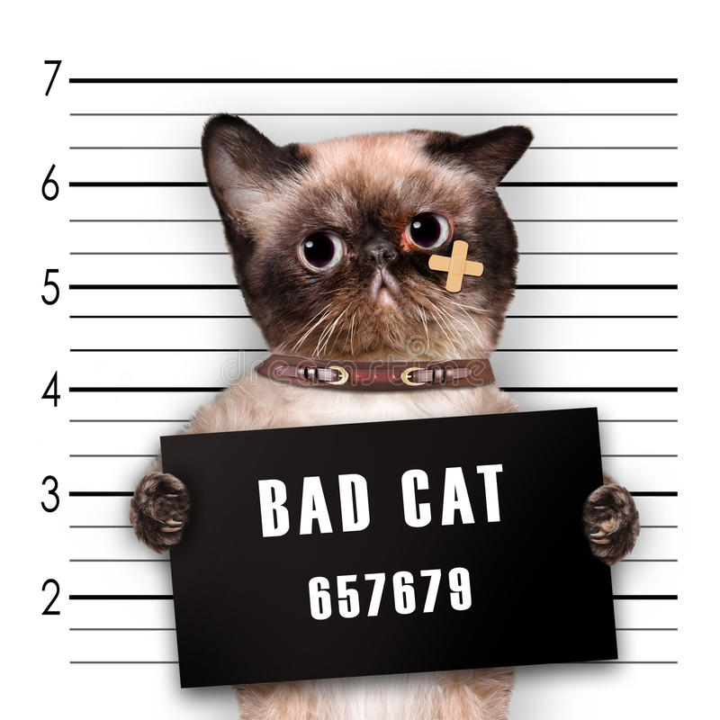 dålig katt royaltyfri bild