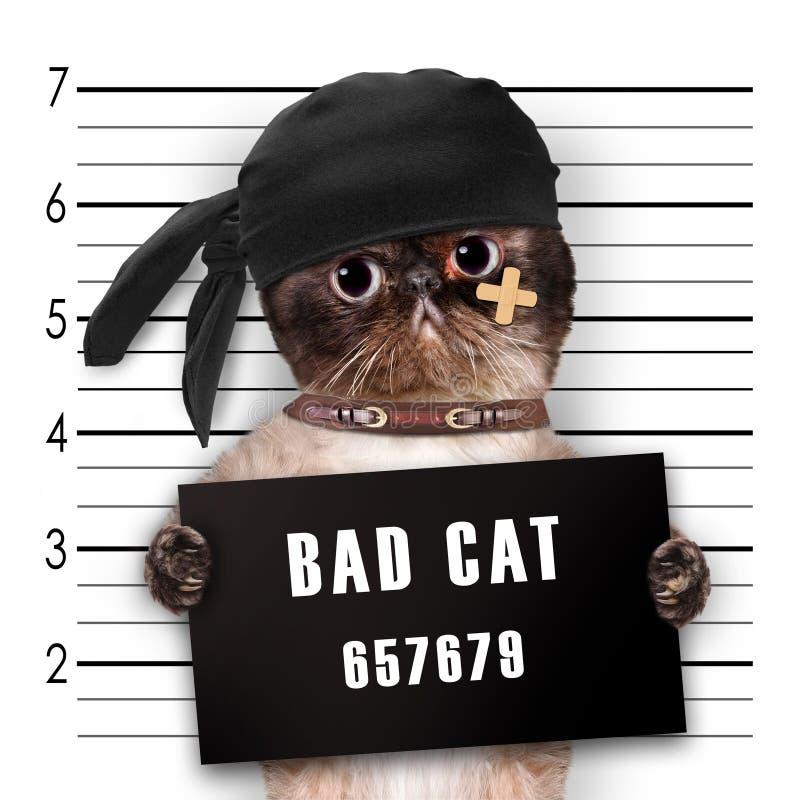 dålig katt arkivbilder