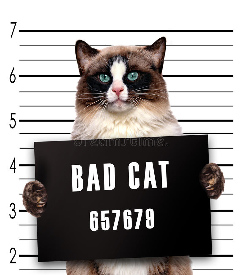 dålig katt arkivfoton
