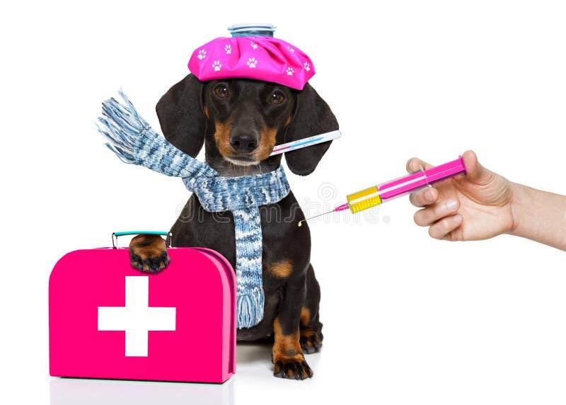 Dåligt sjuk hund med sjukdom och den vaccinera injektionssprutan royaltyfri bild