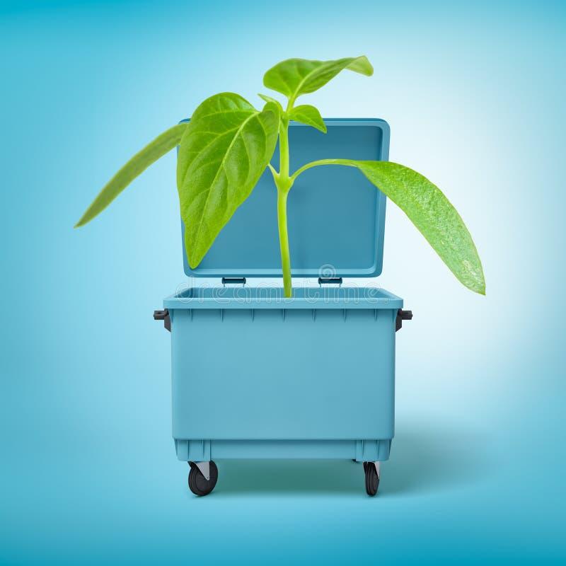 3d生长在一个蓝色垃圾箱的一个绿色新芽的翻译 免版税库存照片