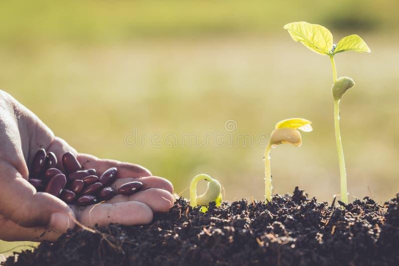 Dé celebrar la semilla y el crecimiento de la planta verde joven imagen de archivo libre de regalías