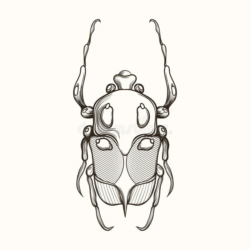 Dé el bosquejo exhausto del grabado del insecto del escarabajo, de mayo del escarabajo o de Europea ilustración del vector