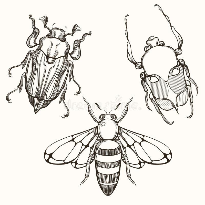 Dé el bosquejo exhausto del grabado del insecto del escarabajo, de mayo del escarabajo y de la abeja d ilustración del vector